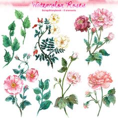 Watercolor Rose Set  digital printable clipart   by Scrapstorybook, Ft750.00