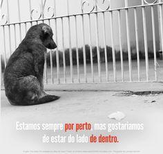 Não compre, adote!  #VL #mutt #viralatasnoscinemas #euapoio