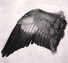 bird's wing