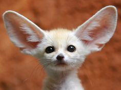 15 Cute Baby Animals That Will Surprise You. Just Look at #14