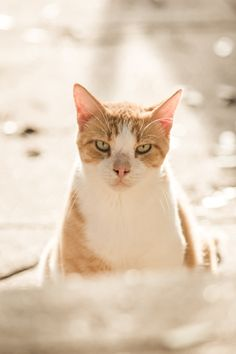 Garfield. Yes, that really is his name. #Cats #light #animals #follow