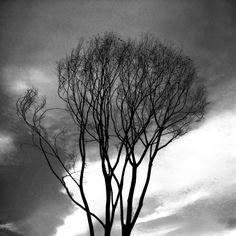 겨울이 왔고, 나무는 생기없이 버텨간다. #winter #tree