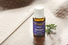 The Vagus Nerve, Juniper is best know for is ability to support the kidneys. But it is also a very good oil for supporting nerve regeneration.
