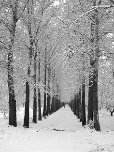snow by Beshef, via Flickr