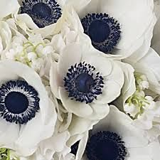 bouquet tulipes blanches anemones marines
