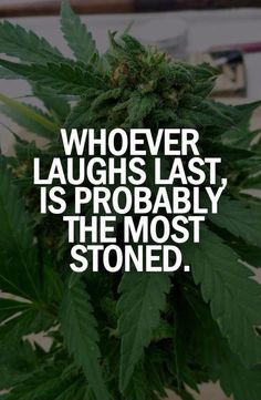 Buy marijuana seeds online from Crop king Seeds. Premium quality cannabis seeds at affordable prices. Choose from the best quality autoflowering, feminized, and regular cannabis seeds with quick and discreet delivery worldwide. Stoner Quotes, Stoner Humor, Weed Humor, 420 Quotes, Qoutes, Funny Quotes, Quit Smoking Tips, Hilarious Pictures, Jokes