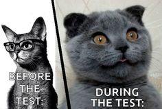 #funny -  cat,  #cat meme