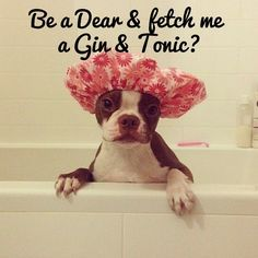 Be a Dear & fetch me  a Gin & Tonic? - Andy Warhol the Boston Terrier