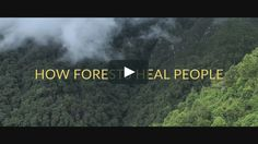 How Forests Heal People on Vimeo 'When you learn to carry the forest within you, your healing has begun'. Ancient Egypt Pyramids, Shinrin Yoku, Forest Bathing, Soul Connection, Mindfulness Activities, My Life Style, Mind Body Soul, Natural World, Helping People