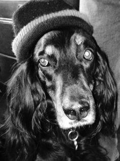 "Pharaoh Hound Dog Fridge Magnet /""THE MORE I LOVE MY DOG/"" by Starprint"