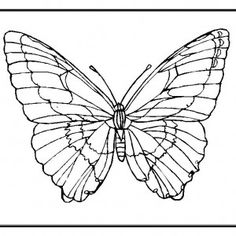 Pin by FOSTER GINGER on COLORING BOOK : BUTTERFLY