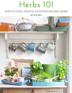 Start Growing Your Own Herbs Today! Whether you have an apartment patio, a kitchen window or a small terrace, it does NOT matter!The Herbs 101 beginners guide and Herb Garden Planner will give you everything you need to know to begin growing your own herbs in your small space garden today. #HerbGarden #Gardening