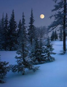 17 Trendy Photography Winter Night Beautiful Moon The Effective Pictures We Offer You A Winter Szenen, Winter Moon, Winter Night, Snow Night, I Love Winter, Winter Images, Winter Pictures, Moon Photography, Winter Photography