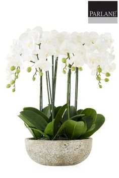 Parlane Large Potted Faux Orchid