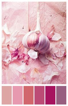 Food Inspiration – I could even eat garlic if you ask me. Food Rings Ideas & Inspirations 2017 - DISCOVER I could even eat garlic if you ask me. Food Photography Styling, Food Styling, Rose Photography, Monochrome Photography, Color Rosa, Pink Color, Purple, Tout Rose, Pinterest Instagram