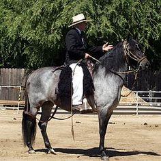 Board for Peruvian Paso horse information