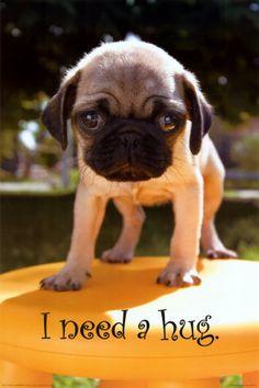 Pug Hug Please!!! @Kelly Teske Goldsworthy Stone Looks like Lola after she went in the pool...