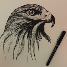 I started this red tailed hawk for my son while keeping him company at the hospital. Work in progress.