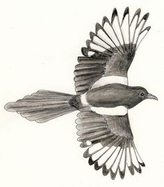 magpie illustrations | Recent Photos The Commons Getty Collection Galleries World Map App ...