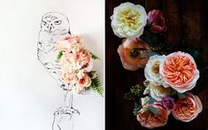 Flora + Fauna | Photographs and Illustrations by Kari Herer