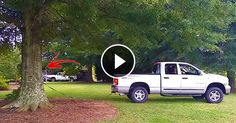 [Trending Now] This Man Tries To Take Down A Massive Tree Take A Closer Look And See The Unexpected Result! IMPRESSIVE!