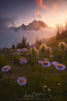 A Valley Between - Mount Rainier National Park - Washingtom - USA