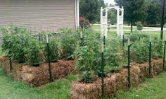 Straw Bale Gardening Lets You Grow Vegetables Without Soil