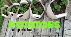 No space for a large garden, but you want home grown taters?  Try growing in bags!! http://preparednessmama.com/potatoes-in-grow-bags/
