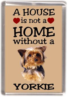 Yorkie Dogs, Dogs And Puppies, Yorkies, All Emoji, Animals And Pets, Cute Animals, Good Night My Friend, Scroll Saw Patterns Free, Emotional Support Animal