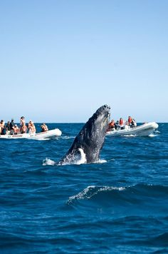 Whale watching in Baja California Sur, Mexico. Picture from https://www.facebook.com/SECTURBCS