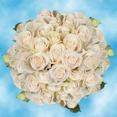 150 Fresh Cut Ivory White Roses | Vendela Roses | Fresh Flowers Wholesale Express Delivery | Perfect for Birthdays, Anniversary or any occasion. ** Learn more by visiting the image link.