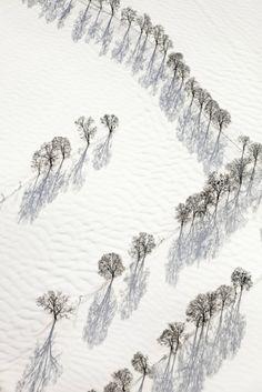 Trees > Photo Klaus Leidorf