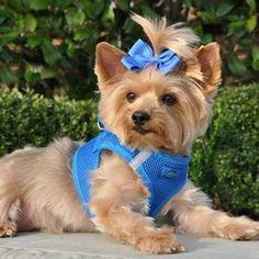 Yorkie Terrier, Yorkie Puppy, Terrier Mix, Silky Terrier, Chien Yorkshire Terrier, Yorky, Dog Steps, Cat Harness, Online Pet Supplies
