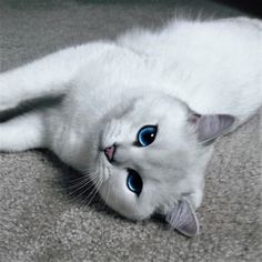 Misschien heeft deze kat wel de mooiste ogen ter wereld.
