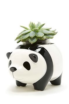 A ceramic planter pot by Streamline™ featuring a panda design with protruding ears, feet, face and tail, and an open top. Succulent Planter Diy, Succulents Diy, Planting Succulents, Planting Flowers, Planter Pots, Panda Nursery, Pot Plante, Panda Love, Cactus Y Suculentas