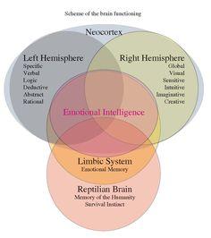 Um gráfico bastante esclarecedor com as articulações entre o neo-cortex e seus hemisférios, Limbic System, Reptilian brain e a Emotional intelligence.