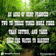 Make Hemp part of your everyday.