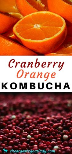 If so then you will love this Orange Cranberry Kombucha Recipe! This kombucha flavor is. Kombucha Flavors, How To Brew Kombucha, Kombucha Recipe, Probiotic Drinks, Kombucha Tea, Kombucha Probiotic, Kombucha Brewing, Healthy Juices, Healthy Drinks