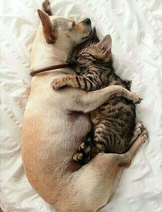 Lets Snuggle cute animals cat cats adorable dog puppy animal kittens pets kitten funny animals Animals And Pets, Baby Animals, Funny Animals, Cute Animals, Nature Animals, I Love Cats, Cute Cats, Cat Fun, Cute Puppies