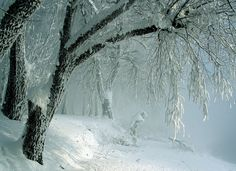 A snow-flocked tree is one of nature's most beautiful sights, in my humble opinion.  This low-hanging tree over a snow covered path almost brings me to tears.  This is:  White Winter Night.  It is my favorite pin on one of my favorite boards:  TREE