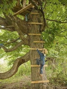 A tree house, the best!