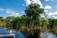 What an enjoyable write up about our park authored by Shelly Ravoli of http://FamilyTravel441.com    Visit Lauderdale VISIT FLORIDA #lovefl #hellosunny    https://www.familytravel411.com/everglades-airboat-adventure-sawgrass-recreation-park/