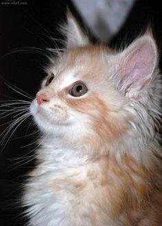 Mundo de Imágenes: Imagen de lindo gatito  [17-11-16]