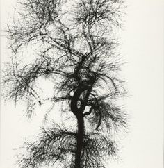Harry Callahan, Multiple Exposure Tree, Chicago @artsy