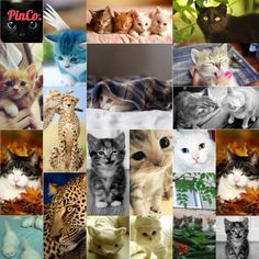 Kittens. Made with PinCo. The only Pinterest Collage tool. http://pin-collage.com