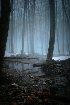 Beautiful misty creek bed...