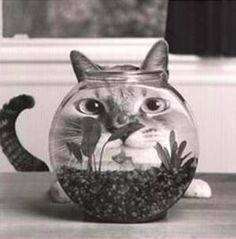 Is this what a cat look like to the fish???
