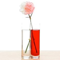 Color Changing Carnations | Experiments | Steve Spangler Science