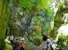May 2020 - Scenic Caves Nature Adventures offers nature, history, scenery and memorable adventures. Explore a self-guided trails of caves carved millions of years ago and savour breathtaking lookouts from the. Nature Adventure, Adventure Tours, Wasaga Beach, Forest Trail, All I Ever Wanted, Blue Mountain, So Little Time, Day Trips, Trip Advisor