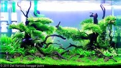 Another awesome aquascape.